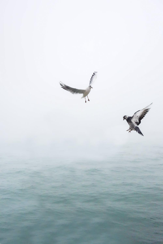 Slap af med fugle