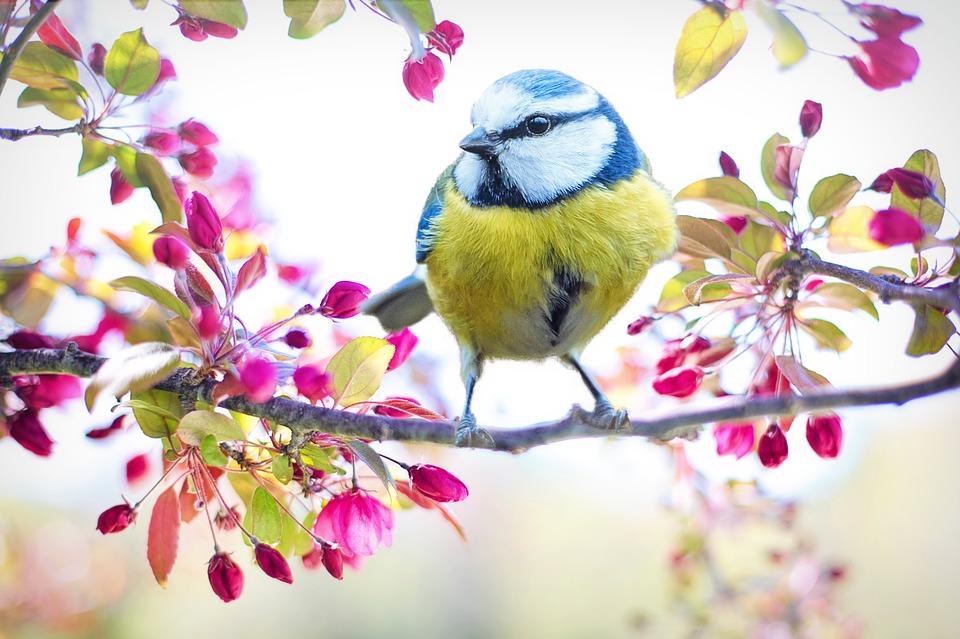 Få en sjov hobby og kig på fugle